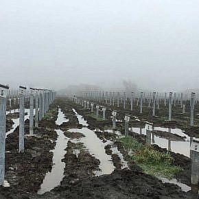 Solarpark Veendam (NL)