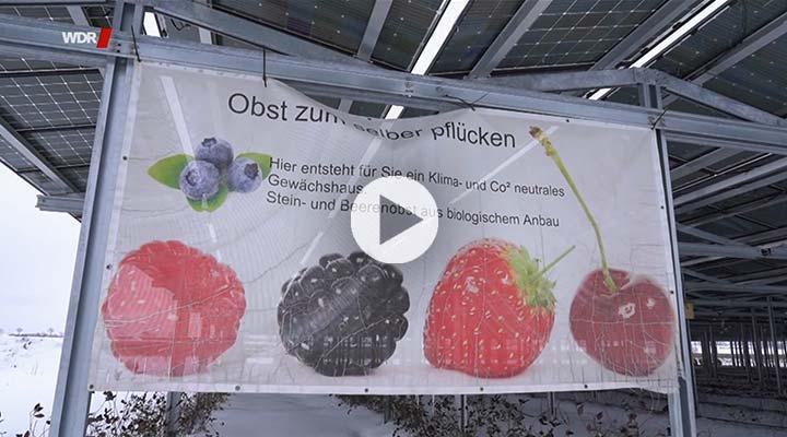 Agri-PV WDR-Markt Video